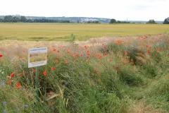 Blühstreifen mit Hinweistafel im Messdorfer Feld