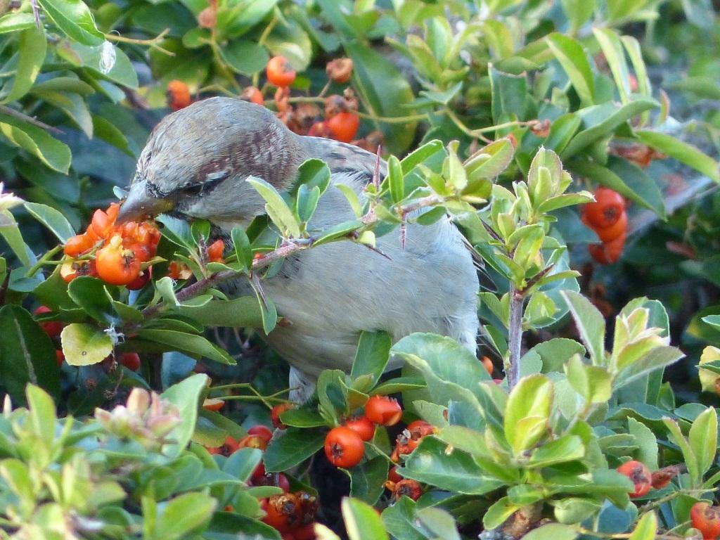 Dornige Hecken mit Beerenfrüchten bieten Deckung und Futter.