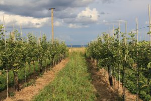 Obstbaumanlage mit Greifvogelansitzstange