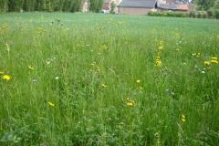Blühstreifen aus Regio-Saatgut