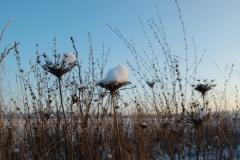 Schneekappen auf den Pflanzen
