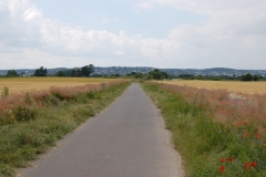 Blühstreifen im Messdorfer Feld