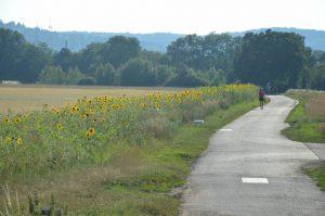 Blühstreifen tragen dazu bei, die Artenvielfalt in der Kulturlandschaft zu fördern.