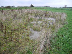 Blänken in Grünland oder Acker dienen als wertvoller Lebensraum für zahlreiche Tiere.