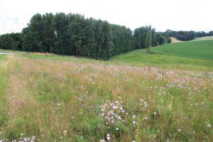 Die mehrjährige Einsaat mit standortangepassten Wildpflanzen schützt die stark geneigte Fläche vor Erosion.