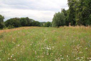 Eine artenreiche Blühfläche erhöht die Strukturvielfalt auf dem Grenzertragsstandort. Zuvor wurde die Fläche ackerbaulich bewirtschaftet.