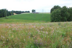 Die bunte Fläche bereichert das Landschaftsbild und fügt sich gut in das Mosaik aus Wald, Grünland und Ackerflächen ein.