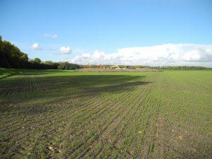Getreide-Einsaat bei Niederkassel-Lülsdorf mit doppeltem Reihenabstand (linke Seite), verringerter Düngung und Verzicht auf Pflanzenschutzmittel.