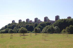 Gehölzneupflanzungen vor der Kulisse des Aachener Klinikums