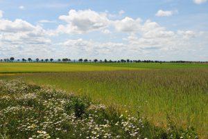Blütenreicher Feldrain in der rheinischen Bördelandschaft Summendes Rheinland Landwirte für Ackervielfalt Stiftung Rheinische Kulturlandschaft