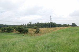 Eine alte Streuobstwiese unterhalb der Heckenpflanzung wurde mit jungen Hochstämmen regionaler Obstsorten ergänzt.