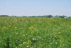 Bei Emmerich wurde als Ausgleichmaßnahme entlang eines Wassergrabens eine artenreiche Grünlandfläche eingesät. Sie nimmt eine wichtige Pufferfunktion für das Gewässer ein.