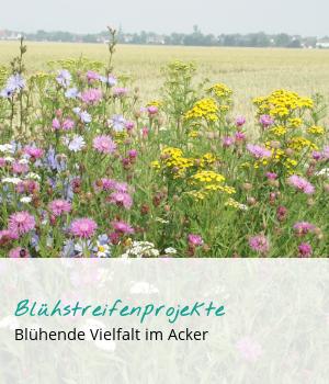 bluehstreifen regiosaatgut