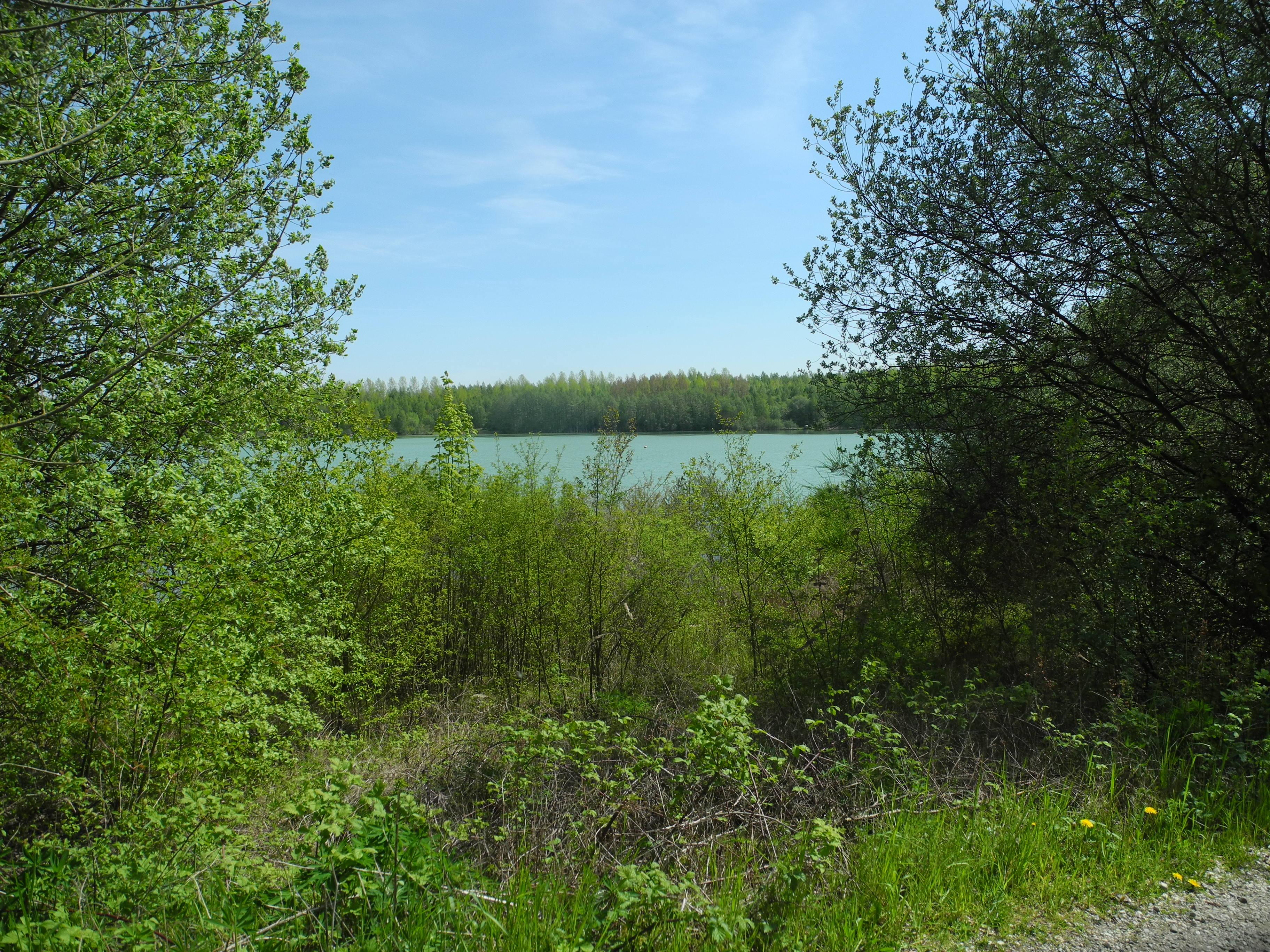 Wald am Blaustein-See