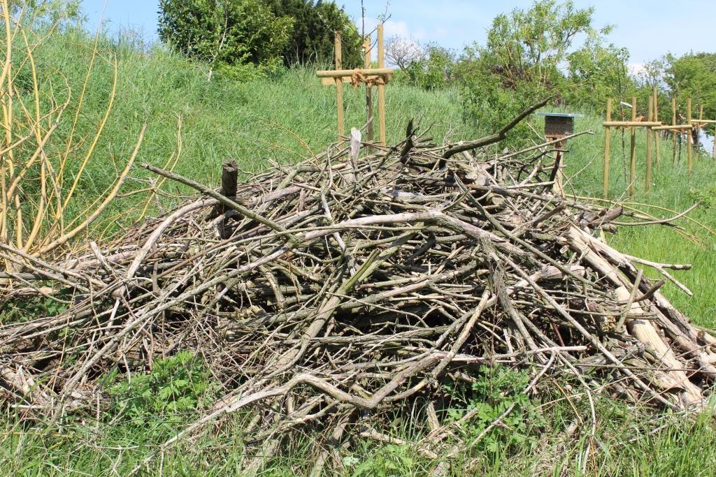 Neu geschaffene Strukturen wie Totholzhaufen bieten Kleintieren Nist- und Unterschlupfmöglichkeiten.