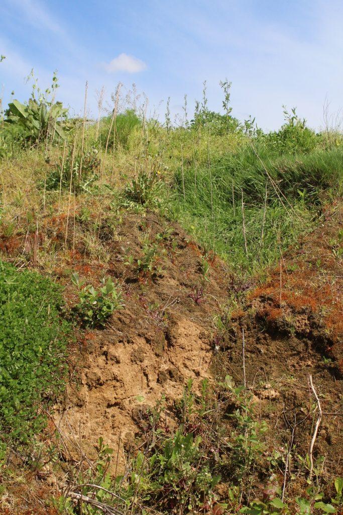 Offene Rohbodenstellen oder Lössabbruchkanten bieten bodennistenden Insekten wertvollen Lebensraum.