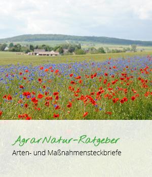 AgrarNatur-Ratgeber Arten- und Maßnahmensteckbriefe