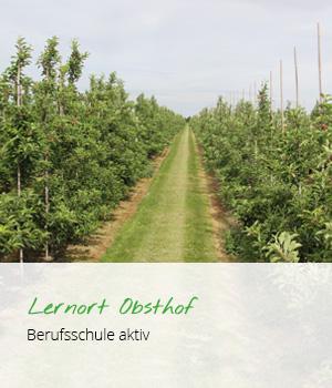 Lernort Obsthof Berufsschule aktiv