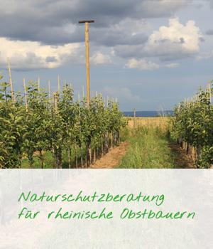 Teaser Naturschutzberatung fuer rheinische Obstbauern