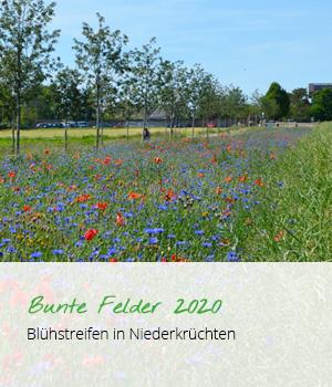 teaser_bunte_felder