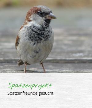 teaser_spatzen_v2