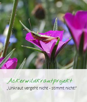teaser_ackerwildprojekt_rheinisch