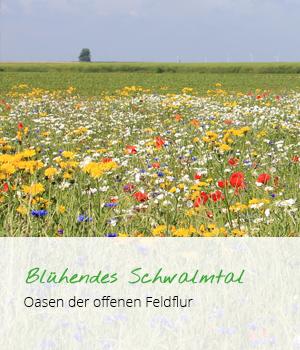 Teaser Blühstreifen R3