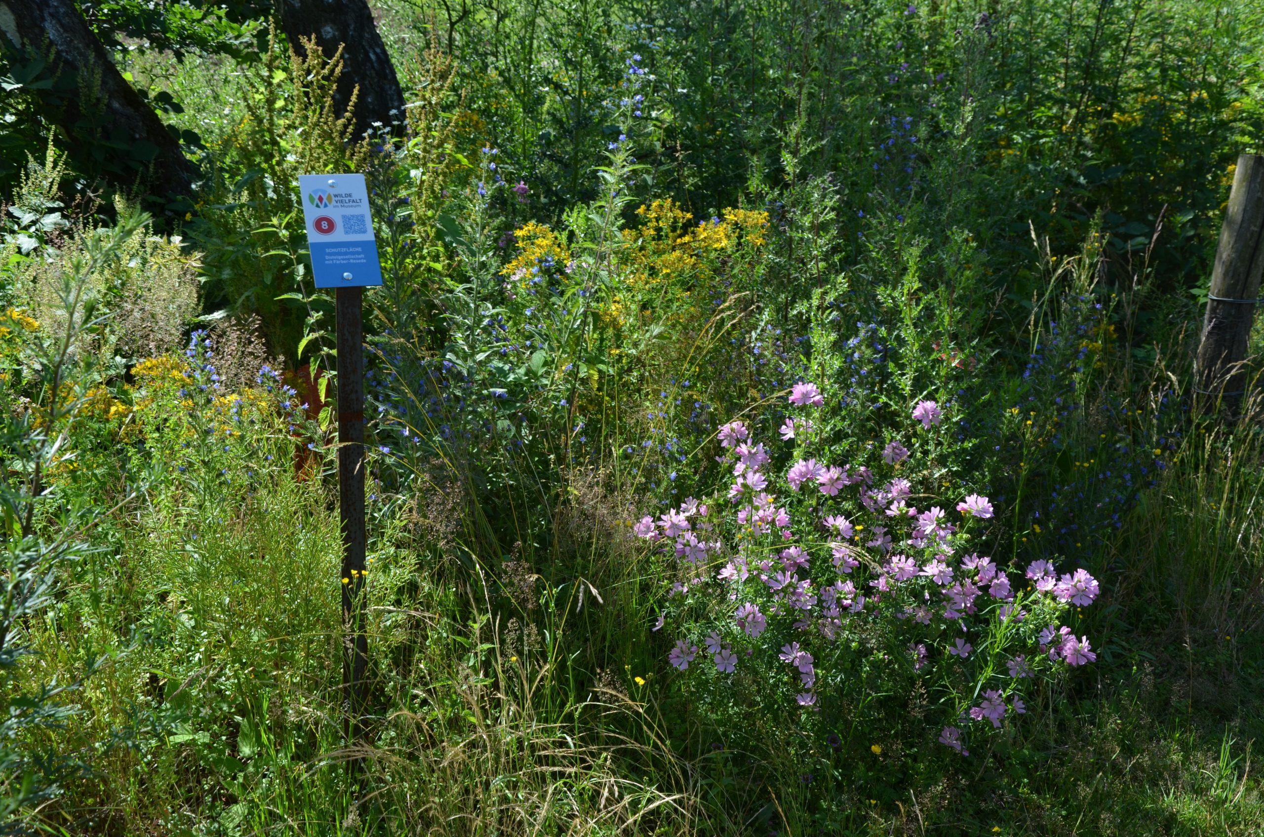 Auf einem Rundweg lassen sich Schutzflächen mit zum Teil bunt blühenden Wildkräutern entdecken.
